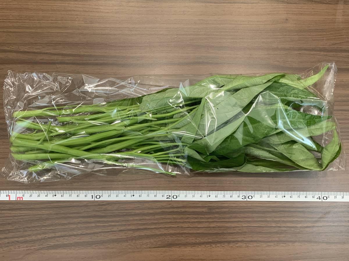 カンコンサイ・チンゲン菜のサイズ